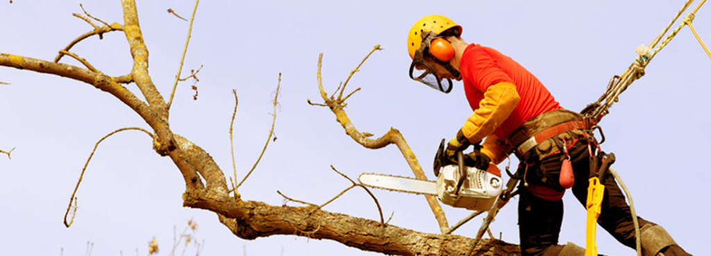 United Tree Services Wollongong
