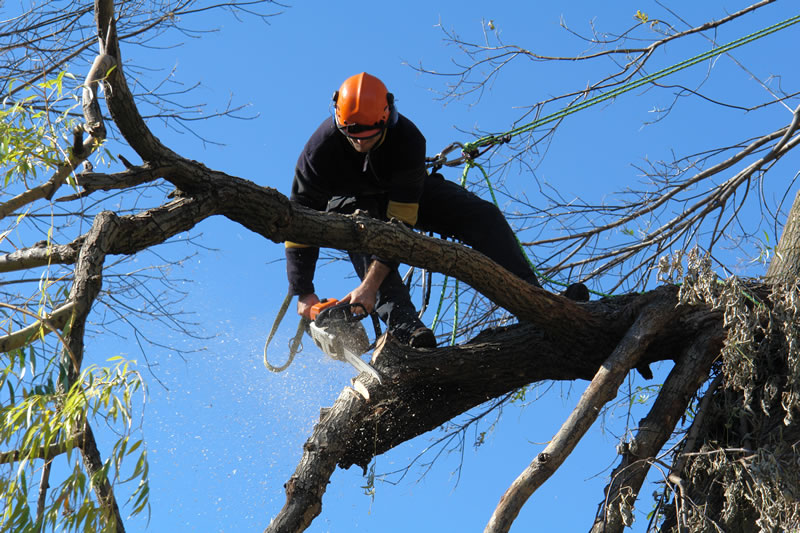 wollongong tree removal